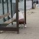 A homeless black woman takes a shit at an RTA bus stop while a passerby video-records her.