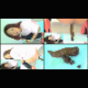 4 different girls take shits while squatting over a diaper pad and seen from multiple camera angles. The turds are closely examined and dissected. These are absolutely gorgeous Japanese girls! Presented in 720P HD. 680MB. About 25.5 minutes.