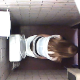 An excellent voyeur clip in which a hidden camera is mounted high up on the ceiling of a public toilet stall. 2 different women are recorded shitting with clear audio. The first is subtle plopping. The second is a loose, wet dump. Over 6 minutes.