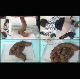 4 Japanese girls take turns shitting, recorded from several different angles and featured as a multi-cam presentation. Each poop pile is measured for size, closely examined, and even dissected to show its texture. 720P HD. 489MB file. Over 32.5 minutes.