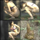 A Japanese video production featuring multiple women being secretly observed while they poop in some public, outdoor location. Next, the cameraman examines their abandoned messes. Over 37 minutes. 318MB, MP4 file requires high-speed Internet.