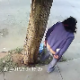 With all those cute FaceBook and YouTube videos out there humanizing animals, this one does not. A Mexican woman takes a shit in a public place recorded by a security camera, and dogs quickly close in on the fresh turd for lunch. Hilarious!