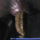 A nice, clear, close-up scene of a soft poop emerging from a blossoming butt-hole. We get to see the entire finished product presented nicely on a plate.
