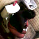 A sneaky cameraman video-records an unsuspecting, Hispanic woman as she takes a shit in a public restroom. Although audio is somewhat poor, you can clearly see the massive turd visible in the toilet when she stands up to wipe!