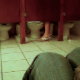 Someone films the activity in a womens public restroom and singles out one stall in which a woman sits on the toilet for a very long time - probably taking a shit, although no distinctive poop sounds are audible.