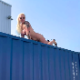 A tattooed, blonde, European girl risks her life to poop over the side of a high shipping container overlooking a long drop below. Her massive poop is mashed completely flat by the long fall. Presented in 720P HD. About 2.5 minutes.
