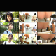 This Japanese video features at least 13 women shitting into a a floor toilet rigged with multiple cameras. Consistent massive shits. Some are runny. Each girl is questioned afterwards. 693MB file. About 2 hours.