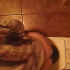 A hidden camera mounted in the ceiling above a toilet records a woman taking a shit and wiping herself. Poop is somewhat visible in the toilet bowl when she stands up to flush.